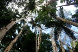Lookup, Cairns, Queensland.
