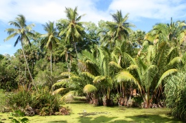 The Cairns Botanic Gardens AKA the rainforest jungle.