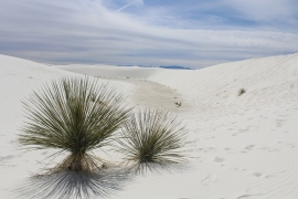 Plants or aliens, White Sands National Monument in New Mexico.